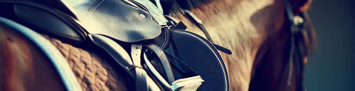 Equine Showcase